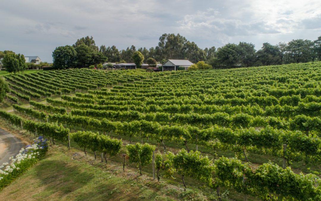 Toms Cap Vineyard